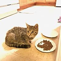 Adopt A Pet :: *Courtesy Post* Katie - Covington, KY