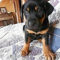Adopt A Pet :: Jessica - San Diego, CA