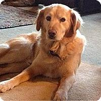 Adopt A Pet :: Redmond - Denver, CO