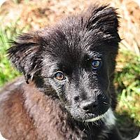Adopt A Pet :: Jewel - New Canaan, CT
