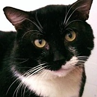 Adopt A Pet :: Niven - Denver, CO