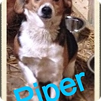 Adopt A Pet :: Piper - Hazard, KY