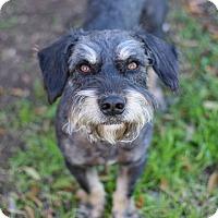 Adopt A Pet :: Jet - San Antonio, TX