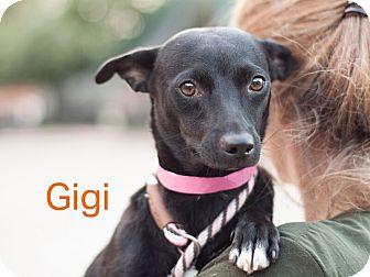 Terrier (Unknown Type, Small) Mix Dog for adoption in Dallas, Texas - Gigi