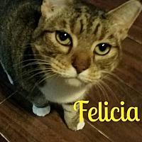 Adopt A Pet :: Felecia - Grand Blanc, MI