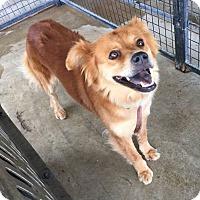 Adopt A Pet :: Bella - Lewisburg, TN