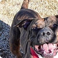 Adopt A Pet :: Budda - Meridian, ID