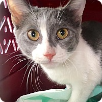 Adopt A Pet :: Hazel - East Brunswick, NJ