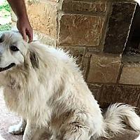 Adopt A Pet :: Athena - Kyle, TX