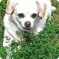 Adopt A Pet :: Bubby - Charlottesville, VA