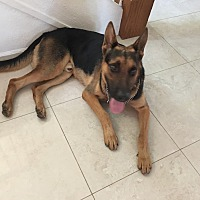 German Shepherd Dog Mix Dog for adoption in Glendale, Arizona - Germie
