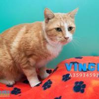 Adopt A Pet :: TCR 12 (8-7-17) - San Angelo, TX