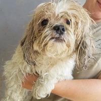 Adopt A Pet :: Motts - Tulsa, OK