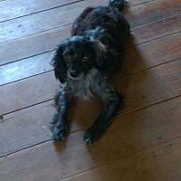 Adopt A Pet :: Max - Lancaster, KY