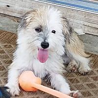 Adopt A Pet :: Daisy - GREENLAWN, NY