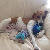 Adopt A Pet :: Serena - Staunton, VA