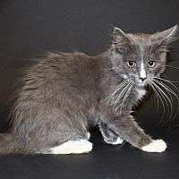 Adopt A Pet :: Bonnie - Pasadena, CA
