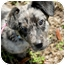 Photo 2 - Catahoula Leopard Dog/Dachshund Mix Puppy for adoption in Houston, Texas - Logan