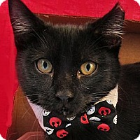 Adopt A Pet :: Snaps - Brooklyn, NY