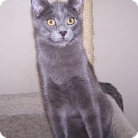 Adopt A Pet :: K-Gloria3-Grant - Colorado Springs, CO