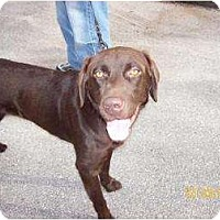 Adopt A Pet :: Romeo - Altmonte Springs, FL