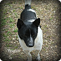 Adopt A Pet :: Wagner - Vancleave, MS
