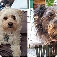 Adopt A Pet :: *PENDING - Willow & Lily - Westport, CT