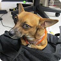 Adopt A Pet :: Hogan - Gilbert, AZ