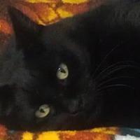 Adopt A Pet :: Prince - Oakland, OR