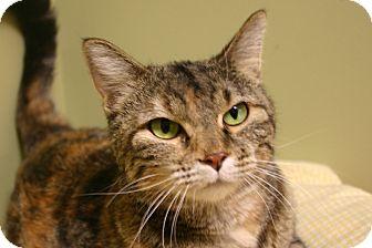 Domestic Shorthair Cat for adoption in Hastings, Nebraska - Elsie