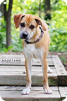 Terrier (Unknown Type, Medium) Mix Dog for adoption in Edwardsville, Illinois - Maverick