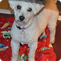 Adopt A Pet :: Barbara - Prole, IA