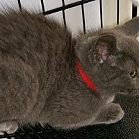 Adopt A Pet :: Smokee - North Highlands, CA