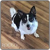 Adopt A Pet :: Rocco - DeForest, WI