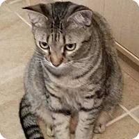 Adopt A Pet :: Bunny - Mansfield, TX