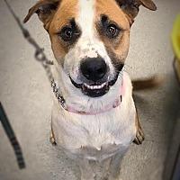 Adopt A Pet :: Logan - Bonney Lake, WA