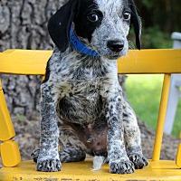 Adopt A Pet :: Zin - Waldorf, MD