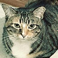 Adopt A Pet :: Blossom - Salt Lake City, UT