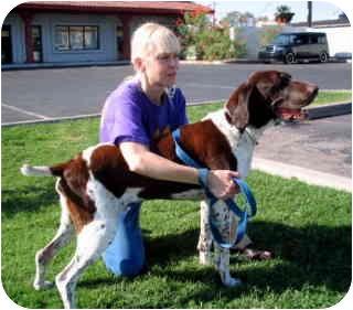 Pointer Dog for adoption in Scottsdale, Arizona - Maxmillan ADOPTED