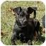 Photo 2 - Chihuahua/Terrier (Unknown Type, Small) Mix Dog for adoption in Thomaston, Georgia - Cisco