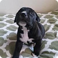 Adopt A Pet :: Buster - Marlton, NJ