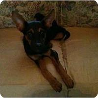 Adopt A Pet :: Bailey - Seneca, SC