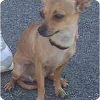 Adopt A Pet :: Fawn - Las Vegas, NV