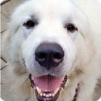 Adopt A Pet :: Heathcliff - Minneapolis, MN