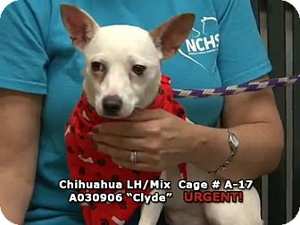 Chihuahua Mix Dog for adoption in Newnan City, Georgia - Clyde