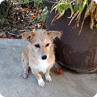 Adopt A Pet :: Tanya - Simi Valley, CA