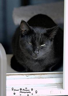 Domestic Shorthair Cat for adoption in Transfer, Pennsylvania - Mama Kitty