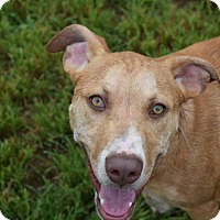 Adopt A Pet :: Loomis - Lebanon, CT
