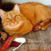 Adopt A Pet :: Goldie - N. Billerica, MA
