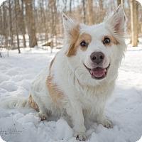 Adopt A Pet :: Kodak - Drumbo, ON